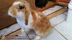 Kaninchenfan Lucky - Mein Kaninchenloch: Good Morning world  (^_~) are you already up and ready for today? (^.^) Lucky in the background sleeps even now hehe (^.~)  #kaninchen #rabbits #lapin #hare #usagi #hasen #karnickel   kaninchenfanlucky-meinkaninchenloch.blogspot.de/2014/08/good-morning-world-are-you-already-up.html