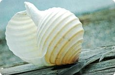 There is always one more special shell I just have to pick up. Reminds me to listen with my heart.