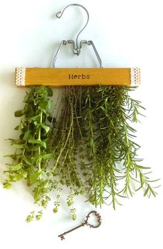 What a smart idea for drying herbs.