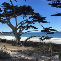 Carmel beach #carmelbythesea #carmelbeach #carmel #monterey #montereybay #california #pacificbeach #pacific #pacifico #usa #beach #nature #dune #dunes #montereybaylocals - posted by Gianna Caravello https://www.instagram.com/gianna_cara - See more of Monterey Bay at http://montereybaylocals.com