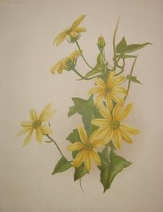 yellow flowers  no. - 07