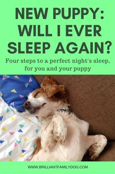 New puppy? how to settle her in fast and ensure a good night's sleep for both of you. Read the article! New puppy? how to settle her in fast and ensure a good night's sleep for both of you. Read the article! Puppy Training Tips, Training Your Puppy, Potty Training, Crate Training, Training Classes, Training Pads, Leash Training, Toilet Training, Kennel Training A Puppy