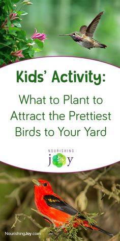 This is a GREAT activity to do with your kids, as it will foster the joy of discovery in both kids AND adults for years to come. Seriously a great idea! Garden Projects, Projects For Kids, How To Attract Birds, Pretty Birds, Activities To Do, Creative Kids, Amazing Gardens, Kid Stuff, Discovery