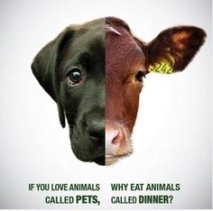 STOP HYPOCRISY: Loving animals is not killing one and caring for the other. Treat all with kindness❤️ #govegan #vegan