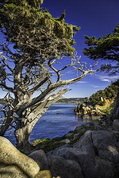 Cypress Courage - Carmel