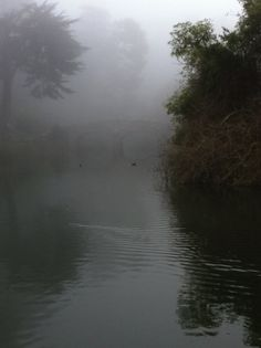 Seeks Ghosts: San Francisco's Ghost of Stow Lake