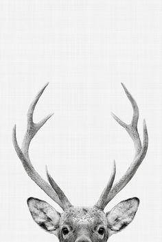Deer Portrait | Poster | artboxONE