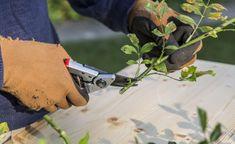 Steckhölzer von Rosen schneiden Lost Garden, Garden Boots, Outside Living, Winter Garden, Shabby Chic, Herbs, Plants, Gardening, Tricks