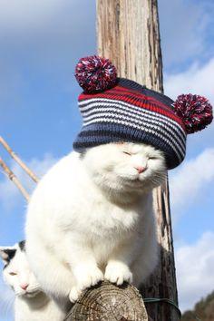 Cute SHIRO!!! :D