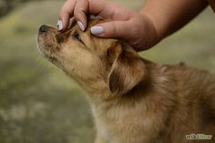 Quiet a Barking Dog - wikiHow