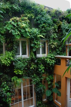 urban vertical gardening | patrick blanc's house, paris | design: patrick blanc