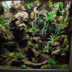 Terrarium plug and play Crested Gecko Vivarium, Crested Gecko Habitat, Lizard Habitat, Reptile Habitat, Terrariums Gecko, Tree Frog Terrarium, Terrarium Reptile, Costa Rica, Dendrobates Terrarium