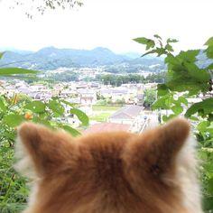 おはようございまーす♪☁️ Good morning!👍 週末まで待ち遠しい木曜日、朝のおさんぽたいむing🐾👣 今朝は涼しく快適なのだ😁 でも、いつもなら鳴いているはずの蝉の声が聞こえない👂 涼しすぎるからかな? おいら達は、朝から涼しくてホッとしています✌️ さぁ、こんな日は夏休みの宿題を進めましょうね✍️ お仕事のみなさんは、元気に笑顔で頑張って生きましょうね!💪 それでは、みなさん生きてらっしゃーい♪👋 Have a nice day!💕🤗 Everyone in the country behind Japan. Have a nice dream.💕😴 #愛犬#ちばわん#保護犬#dog#mixdog#inu#犬#イヌ#いぬ#ペット#pet#ふわふわ#後頭部#後ろ姿#風景#空#sora#sky#イマソラ#お散歩#おさんぽ#散歩#武蔵五日市#Photo#あきる野市#写真 #followmeto