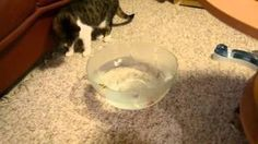 My cats and robot fish - watch video in kristiinaraden.blogspot.fi or YouTube