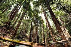 i love trees. and hiking.