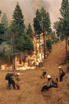 Members of the BLM Silver State Hotshot crew perform burn operations on the southern flank of the Rim Fire in California.