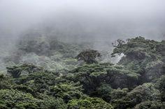 Cloud forest Monteverde by VladBelchenko1. @go4fotos