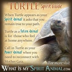 Turtle Symbolism & Meaning
