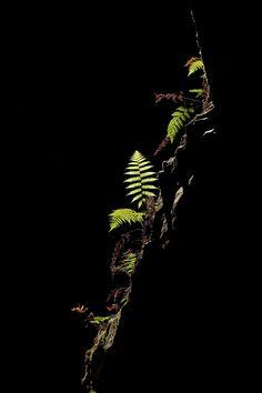 Illuminated by Sarah Van Dyck - Moore on 500px