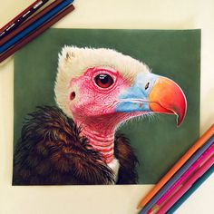 22 year old artist Morgan Davidson creates realistic color pencil illustrations, her work includes detailed studies of body parts and portraits...