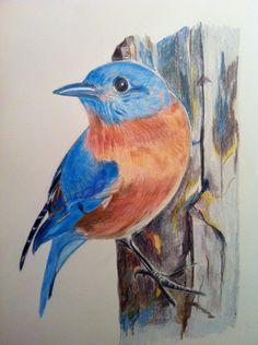 Missouri Bluebird in watercolor pencil by Melangelo on Etsy