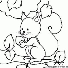 Squirrel Coloring Pages For Children