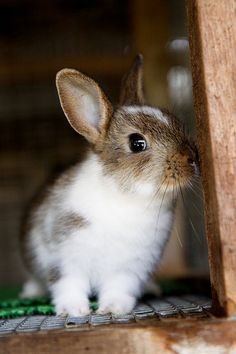 Cute Bunny Rabbit.