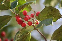 5 Best Wind-Resistant Trees Gardenista