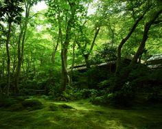 祇王寺 / Gio-ji Temple by Active-U, via Flickr