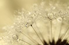 macro photography of water droplets in nature by fine art photographer Sharon Johnstone
