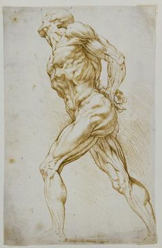 Artist: Peter Paul Rubens {artistic discreet muscular nude male human figure anatomy drawing}