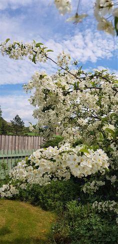 Beautiful garden Beautiful Gardens, Norway, Birds, Spring, Flowers, Plants, Photos, Travel, Animals