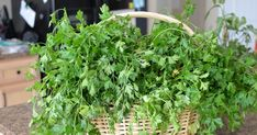 Garden Fresh Parsley    Today I'm going to show you how to freeze herbs.     One of my neighbors gave me a ton of parsley from their gard...