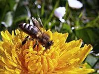 Snadné, zdravé a chutné: 3x bylinkové letní sirupy