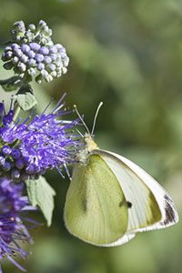 Comment attirer les papillons dans votre jardin - Comment attirer les papillons dans son jardin ...