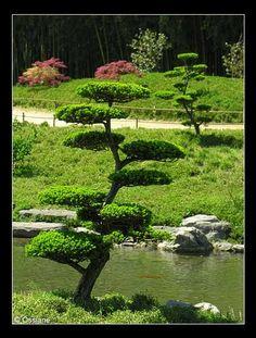 Cómo mantener un árbol con este diseño???