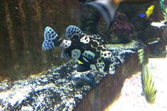 20 Blue Reef Aquarium, Dinosaur Stuffed Animal, Animals, Animales, Animaux, Animal, Animais