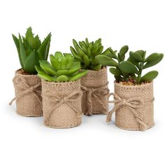 Abbott Collection Green Succulents In Burlap Wrap Home Decor Accent... ($16) ❤ liked on Polyvore featuring home, home decor, decor, filler, green home accessories, burlap home decor and green home decor