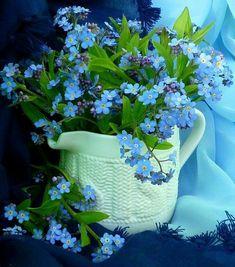 Dried Flowers, Blue Flowers, Forget Me Nots Flowers, Stay Wild Moon Child, Pinterest Garden, Blue Bouquet, Good Morning Flowers, Foto Art, Botanical Flowers