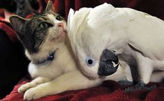 Coco and Lucky the cat, both adopted by a north-american couple. They become friends instantly.