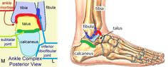 Ankle Joint : Anatomy, Movement & Muscle involvement » How To Relief Ankle Sprain Recovery, Lower Leg Muscles, Ligament Tear, Ankle Joint, Ankle Stretches, Magnetic Resonance Imaging, Sprained Ankle, Home Treatment, Physical Therapy