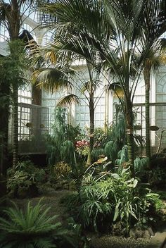 IN THE CONSERVATORY - indoor gardens - greenhouse - solarium - Crystal Palace style