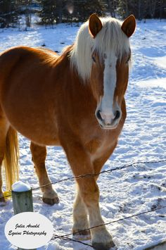 Snowy Jed :: 2015 :: Julia Arnold Equine Photography. #photography #horses