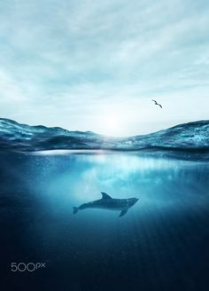 dolphin light by Sean Gladwell on 500px