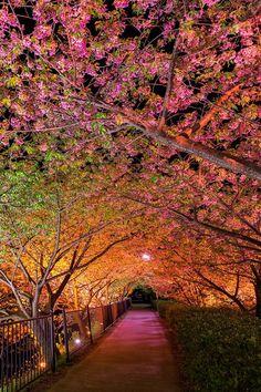 Son muy bellos los colores, no cabe duda... Pero no quisiera caminar por ahí sola... Kawazu, Japan