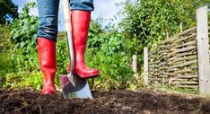A glorious autumn season has arrived -- and that means your lovely lawn will require some fall yard maintenance. Read on to know which chores to do. The post 4 Fall Yard Maintenance Chores to Tackle N Benefits Of Gardening, Organic Gardening, Urban Gardening, Gardening For Beginners, Gardening Tips, Gardening Supplies, Red Wellies, Yard Maintenance, Plantation