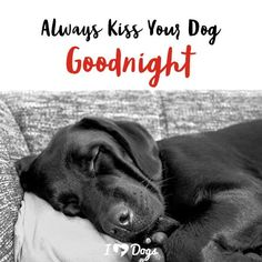 Dog Breeds Always kiss your dog goodnight. Love Pet, I Love Dogs, Puppy Love, Funny Dog Videos, Funny Dogs, Baby Animals, Funny Animals, Dog Tattoos, Dog Memes