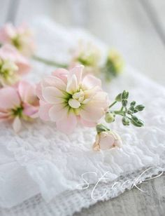 Flower via Ana Rosa Pink Flowers, Beautiful Flowers, Shabby Flowers, Beautiful Things, Deco Floral, Pretty Pastel, Ikebana, Soft Colors, Pink And Green