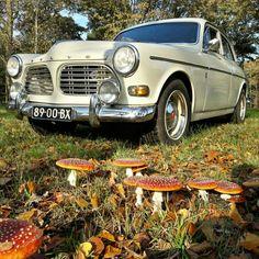 De herfst en de Volvo. #volvoorliefde #volvo #volvoamazon #trouwauto #bruiloft #wedding #romantisch #degrotedag #trouwen #bruid #bruidegom #trouwdag #oldtimer #mooioud #jemooistedag #degrotedag #dagvanjeleven   #liefde Volvo