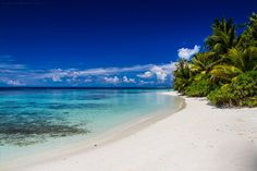 Tropical background by Levente Bodo